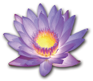 lotus-w-shadow